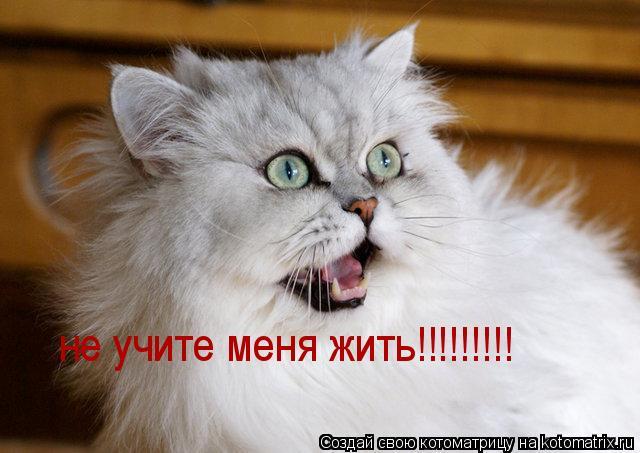 Котоматрица: не учите меня жить!!!!!!!!!