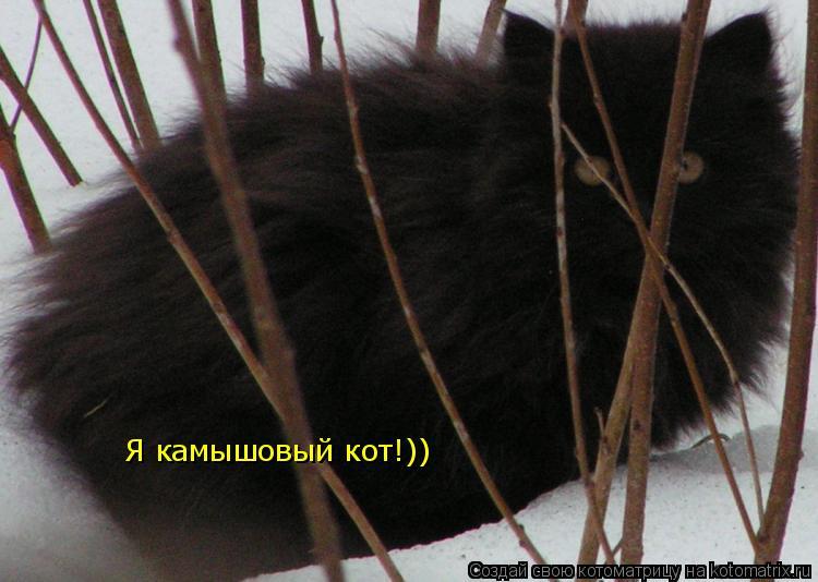 Котоматрица: Я камышовый кот!))