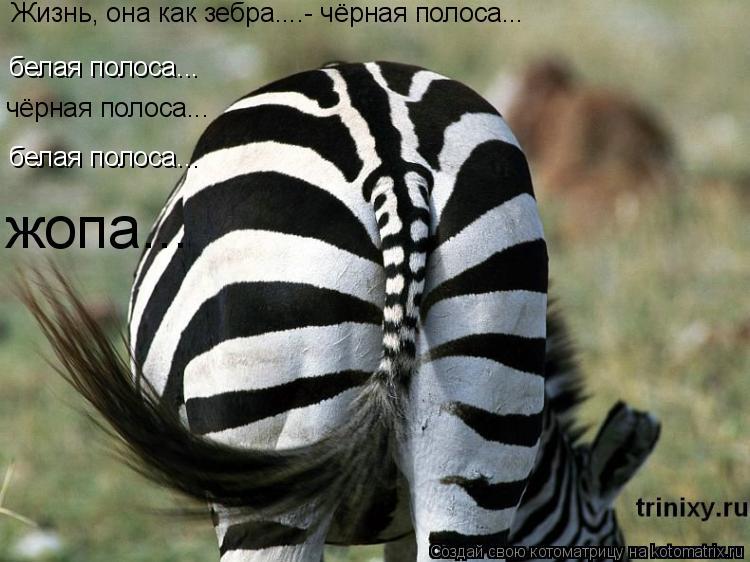 Котоматрица: белая полоса... белая полоса... Жизнь, она как зебра....- чёрная полоса... чёрная полоса... жопа...