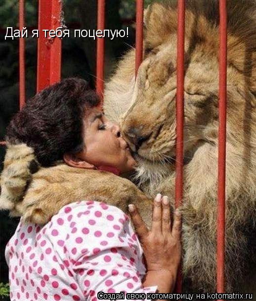 Котоматрица: Дай я тебя поцелую!