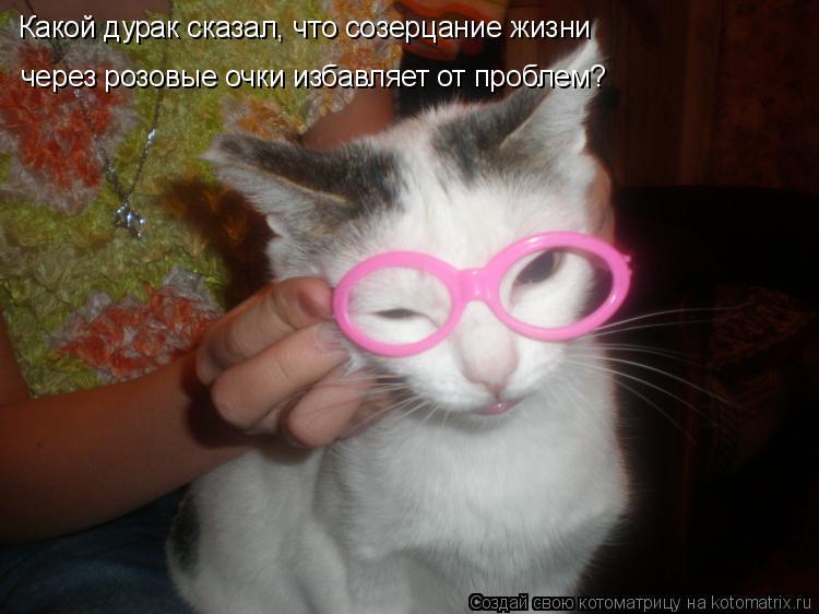 Котоматрица: Какой дурак сказал, что созерцание жизни через розовые очки избавляет от проблем?