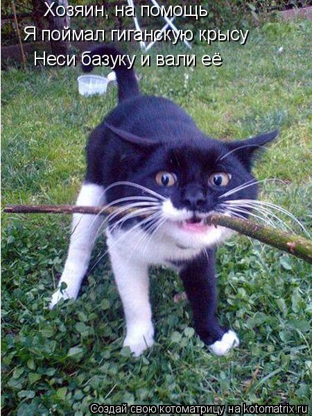 Котоматрица: Хозяин, на помощь Я поймал гиганскую крысу Неси базуку и вали её
