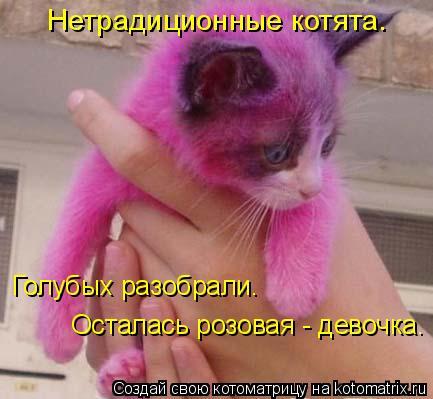 Котоматрица: Нетрадиционные котята. Осталась розовая - девочка. Голубых разобрали.