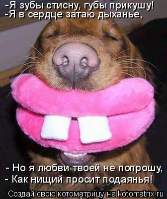 Котоматрица: -Я зубы стисну, губы прикушу!  -Я в сердце затаю дыханье,  - Но я любви твоей не попрошу,  - Как нищий просит подаянья!