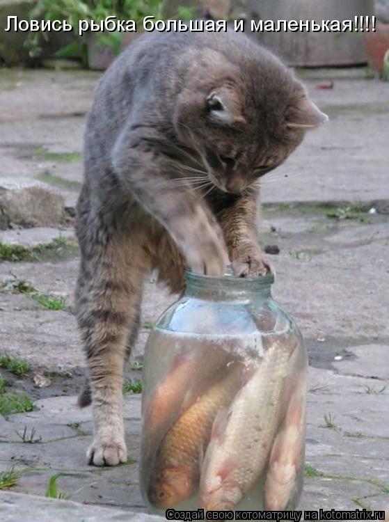 Котоматрица: Ловись рыбка большая и маленькая!!!!