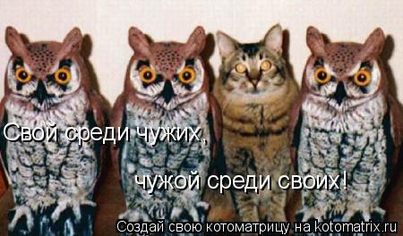 Котоматрица: Свой среди чужих, чужой среди своих!