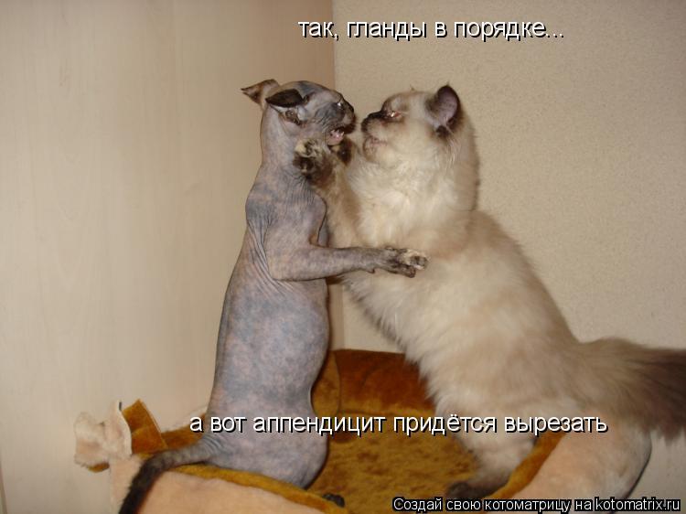 Котоматрица: так, гланды в порядке... а вот аппендицит придётся вырезать
