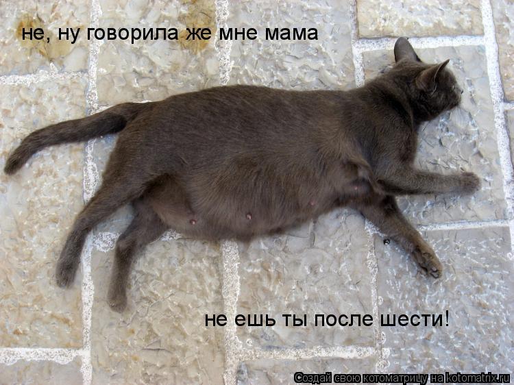 Котоматрица: не, ну говорила же мне мама не ешь ты после шести!