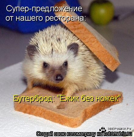"Котоматрица: Супер-предложение  от нашего ресторана: Бутерброд: ""Ежик без ножек"""