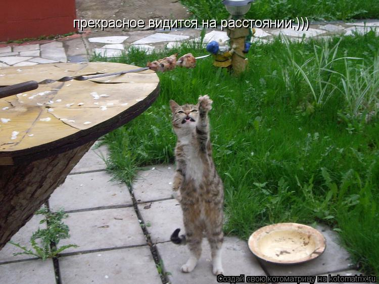 Котоматрица: прекрасное видится на расстоянии;)))