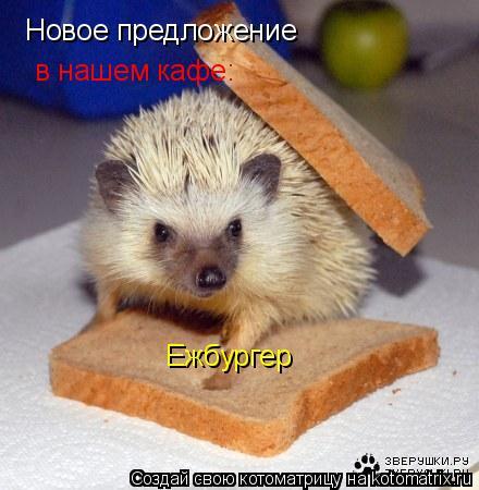 Котоматрица: Новое предложение в нашем кафе: Ежбургер