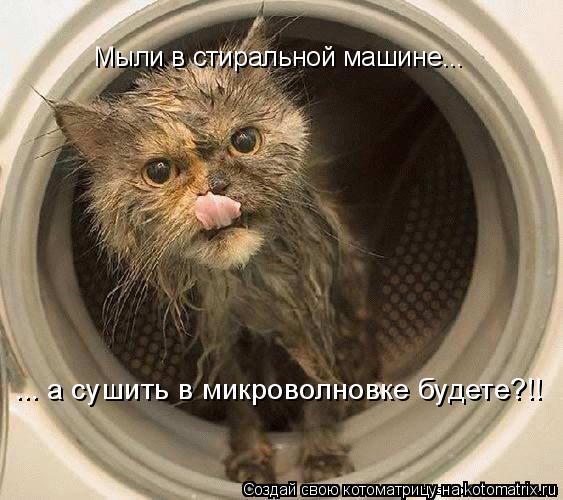 Котоматрица: Мыли в стиральной машине... ... а сушить в микроволновке будете?!!