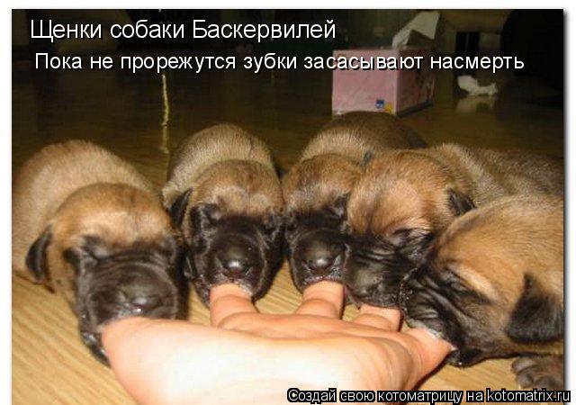 Котоматрица: Щенки собаки Баскервилей Пока не прорежутся зубки засасывают насмерть