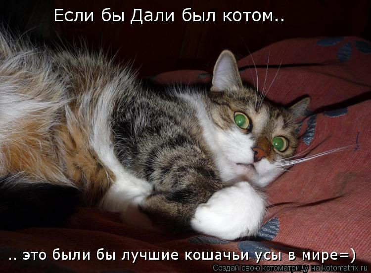 Котоматрица: Если бы Дали был котом.. .. это были бы лучшие кошачьи усы в мире=)