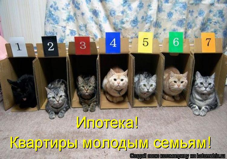 Котоматрица: Ипотека! Квартиры молодым семьям!