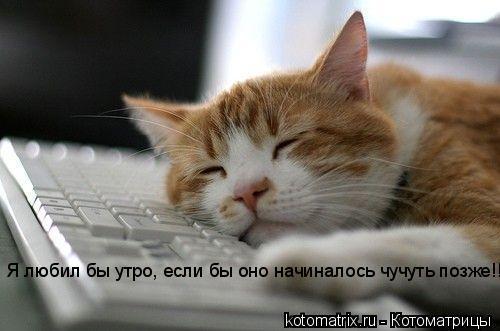 Котоматрица: Я любил бы утро, если бы оно начиналось чучуть позже!!!