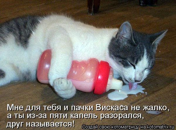 Котоматрица: Мне для тебя и пачки Вискаса не жалко, а ты из-за пяти капель разорался,  друг называется!