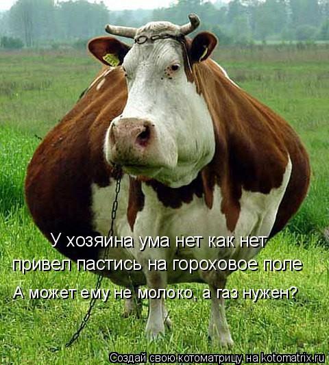 Котоматрица: У хозяина ума нет как нет привел пастись на гороховое поле А может ему не молоко, а газ нужен?