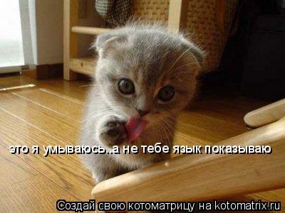 Котоматрица: это я умываюсь..а не тебе язык показываю