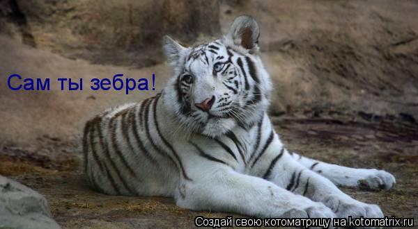 Котоматрица: Сам ты зебра!