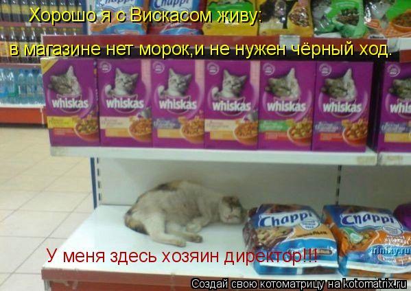 Котоматрица: Хорошо я с Вискасом живу: в магазине нет морок,и не нужен чёрный ход. У меня здесь хозяин директор!!!