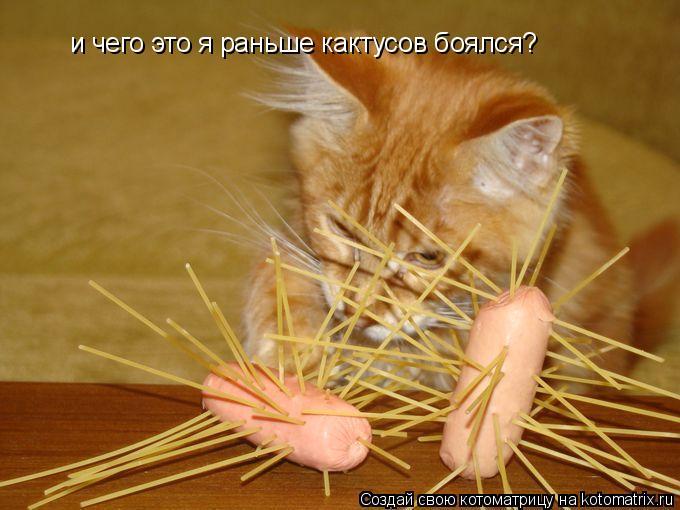 Котоматрица: и чего это я раньше кактусов боялся?