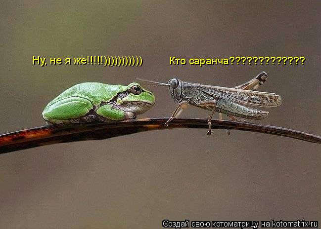 Котоматрица: Кто саранча????????????? Ну, не я же!!!!!)))))))))))