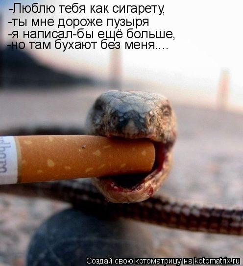 Котоматрица: -Люблю тебя как сигарету, -ты мне дороже пузыря -я написал-бы ещё больше, -но там бухают без меня....