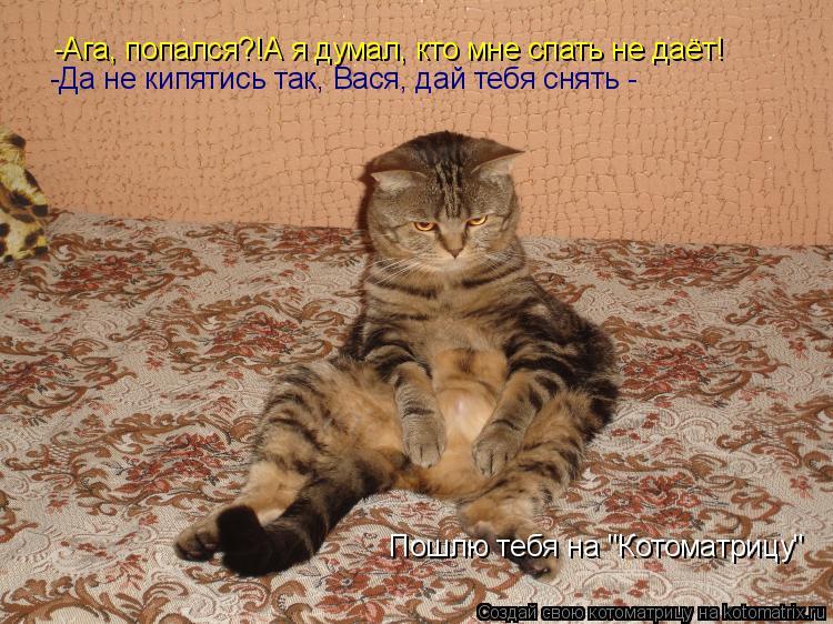 """Котоматрица: -Ага, попался?!А я думал, кто мне спать не даёт! -Да не кипятись так, Вася, дай тебя снять - Пошлю тебя на """"Котоматрицу"""""""