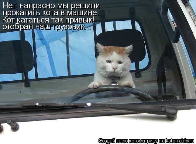 Котоматрица: Нет, напрасно мы решили  прокатить кота в машине. Кот кататься так привык! отобрал наш грузовик...