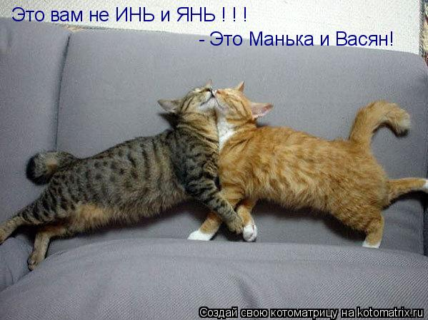 Котоматрица: Это вам не ИНЬ и ЯНЬ ! ! ! - Это Манька и Васян!