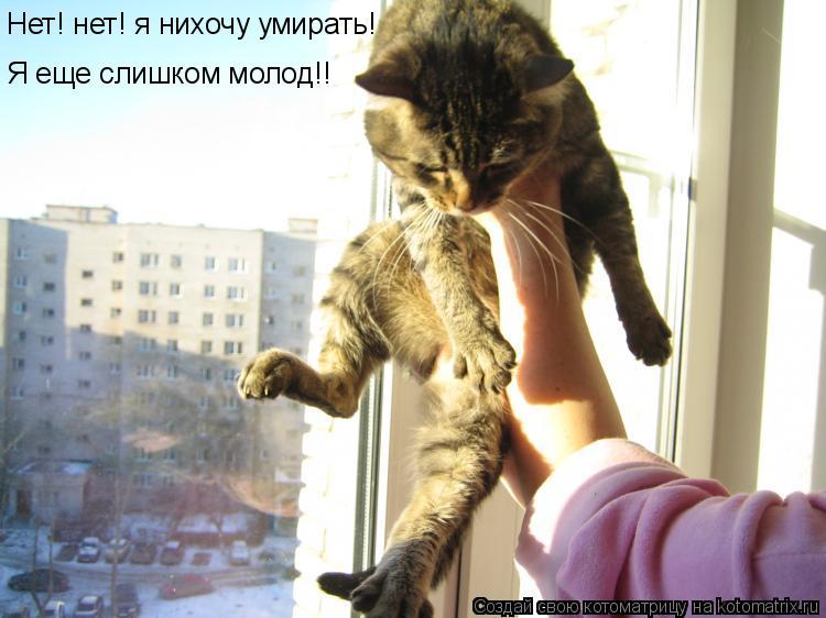 Котоматрица: Нет! нет! я нихочу умирать! Я еще слишком молод!!