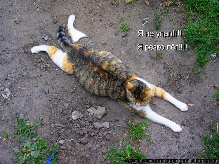 Котоматрица: Я не упал!!!! Я резко лёг!!!!