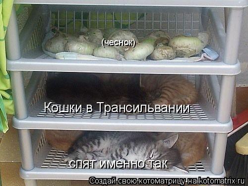 Котоматрица: Кошки в Трансильвании спят именно так (чеснок)