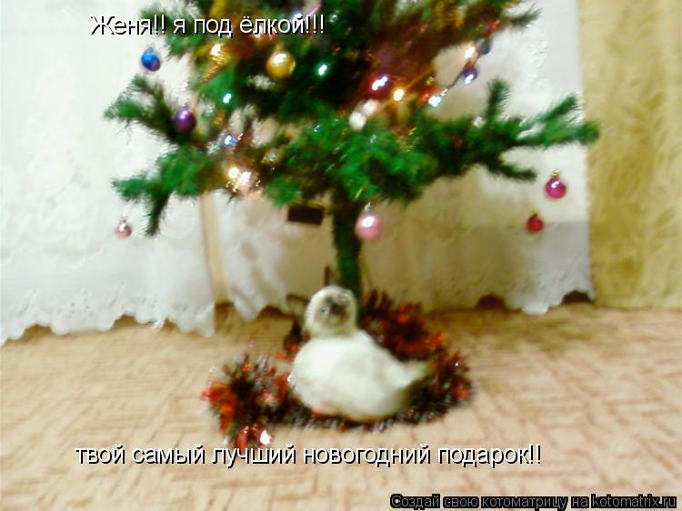 Котоматрица: Женя!! я под ёлкой!!! твой самый лучший новогодний подарок!!