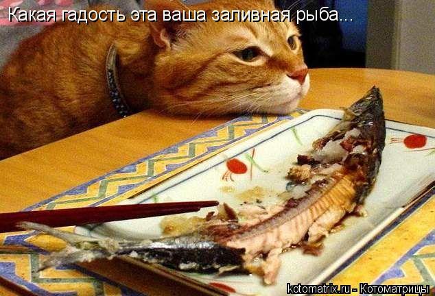 Котоматрица: Какая гадость эта ваша заливная рыба...