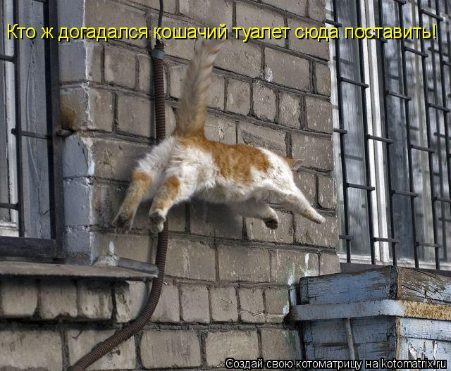Котоматрица: Кто ж догадался кошачий туалет сюда поставить!