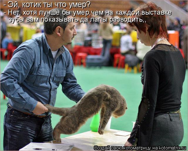Котоматрица: - Эй, котик ты что умер? - Нет, хотя лучше бы умер,чем на каждой выставке зубы вам показывать да лапы разводить,,
