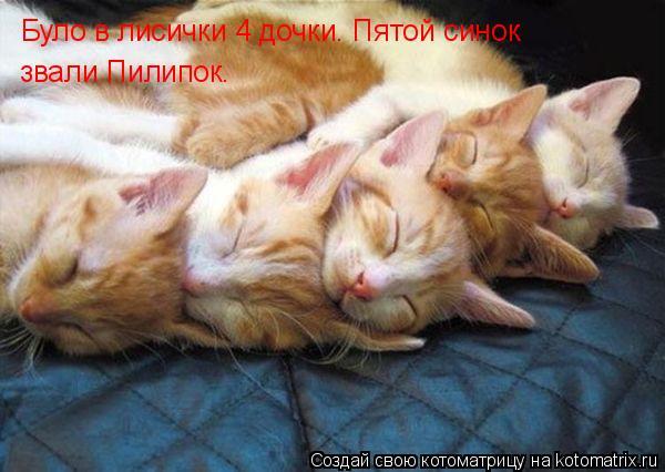 Котоматрица: Було в лисички 4 дочки. Пятой синок  звали Пилипок.