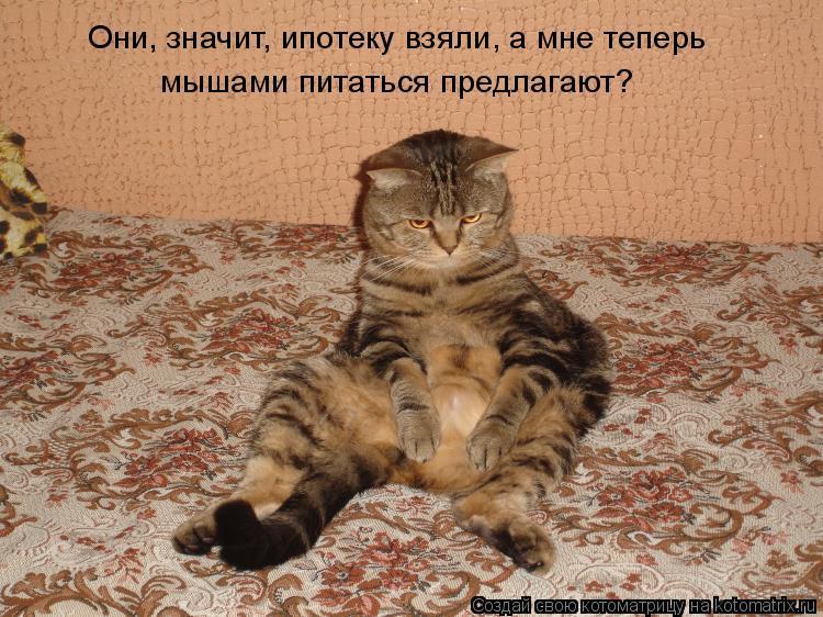 Котоматрица: Они, значит, ипотеку взяли, а мне теперь  мышами питаться предлагают?