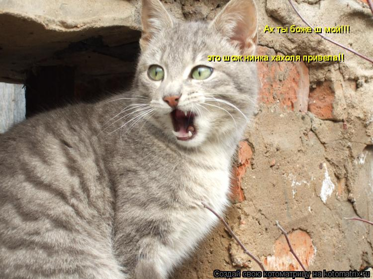 Котоматрица: это шож нинка хахоля привела!! Ах ты боже ш мой!!!