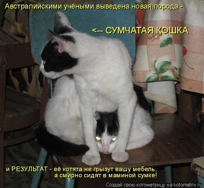 Котоматрица: Австралийскими учёными выведена новая порода - <-- СУМЧАТАЯ КОШКА а смирно сидят в маминой сумке! и РЕЗУЛЬТАТ - её котята не грызут вашу мебел