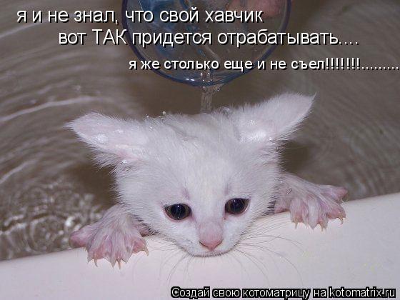Котоматрица: я и не знал, что свой хавчик вот ТАК придется отрабатывать....  я же столько еще и не съел!!!!!!!..........