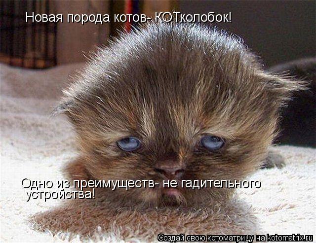 Котоматрица: Новая порода котов- КОТколобок!  Одно из преимуществ- не гадительного  устройства!
