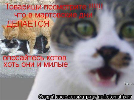 Котоматрица: Товарищи посмотрите !!!!!! что в мартовские дни ДЕЛАЕТСЯ опосайтесь котов хоть они и милые