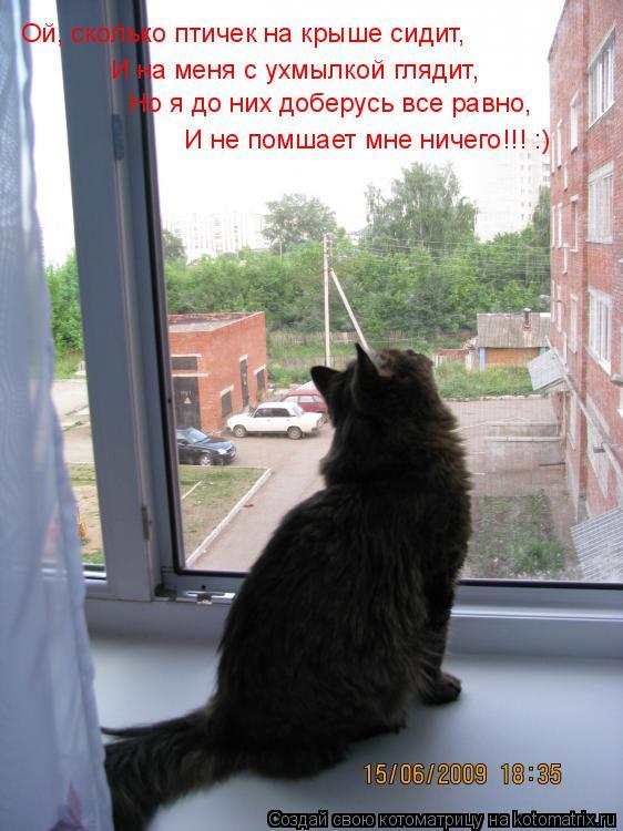 Котоматрица: Ой, сколько птичек на крыше сидит, И на меня с ухмылкой глядит, Но я до них доберусь все равно, И не помшает мне ничего!!! :)