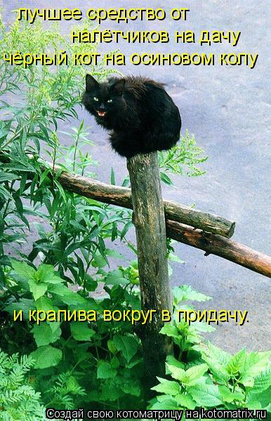 Котоматрица: лучшее средство от налётчиков на дачу чёрный кот на осиновом колу и крапива вокруг в придачу.