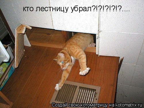 Котоматрица: кто лестницу убрал?!?!?!?!?....