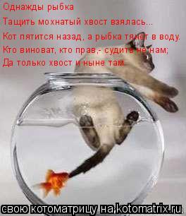 Котоматрица: Однажды рыбка Тащить мохнатый хвост взялась... Кот пятится назад, а рыбка тянет в воду. Кто виноват, кто прав,- судить не нам; Да только хвост и