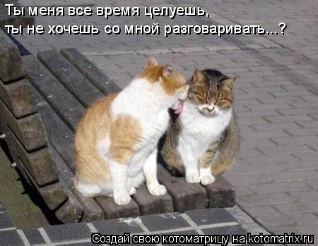 Котоматрица: Ты меня все время целуешь, ты не хочешь со мной разговаривать...?